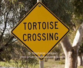Sign - tortoise crossing