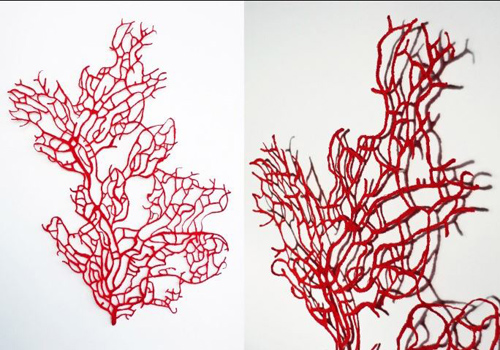 Red-Coral-Fan