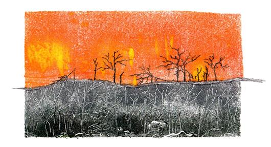 Print1-P4-Bushfires1