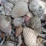 P6-Shells1