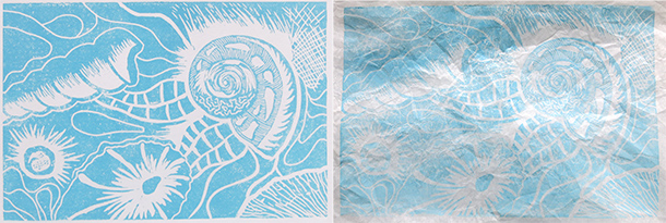 Shell-prints-1