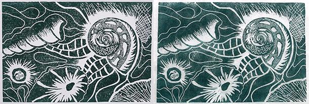 Shell-prints-6